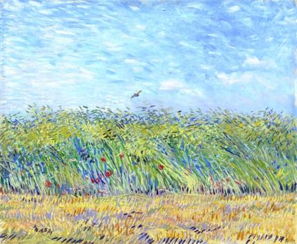 ヒバリのいる麦畑