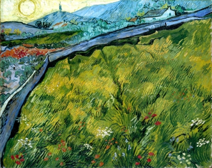 日の出の春小麦の畑