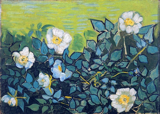 Wild Roses 1890 by Vincent Van Gogh